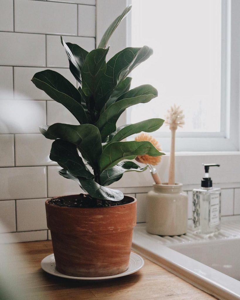 Cache-pot et plante
