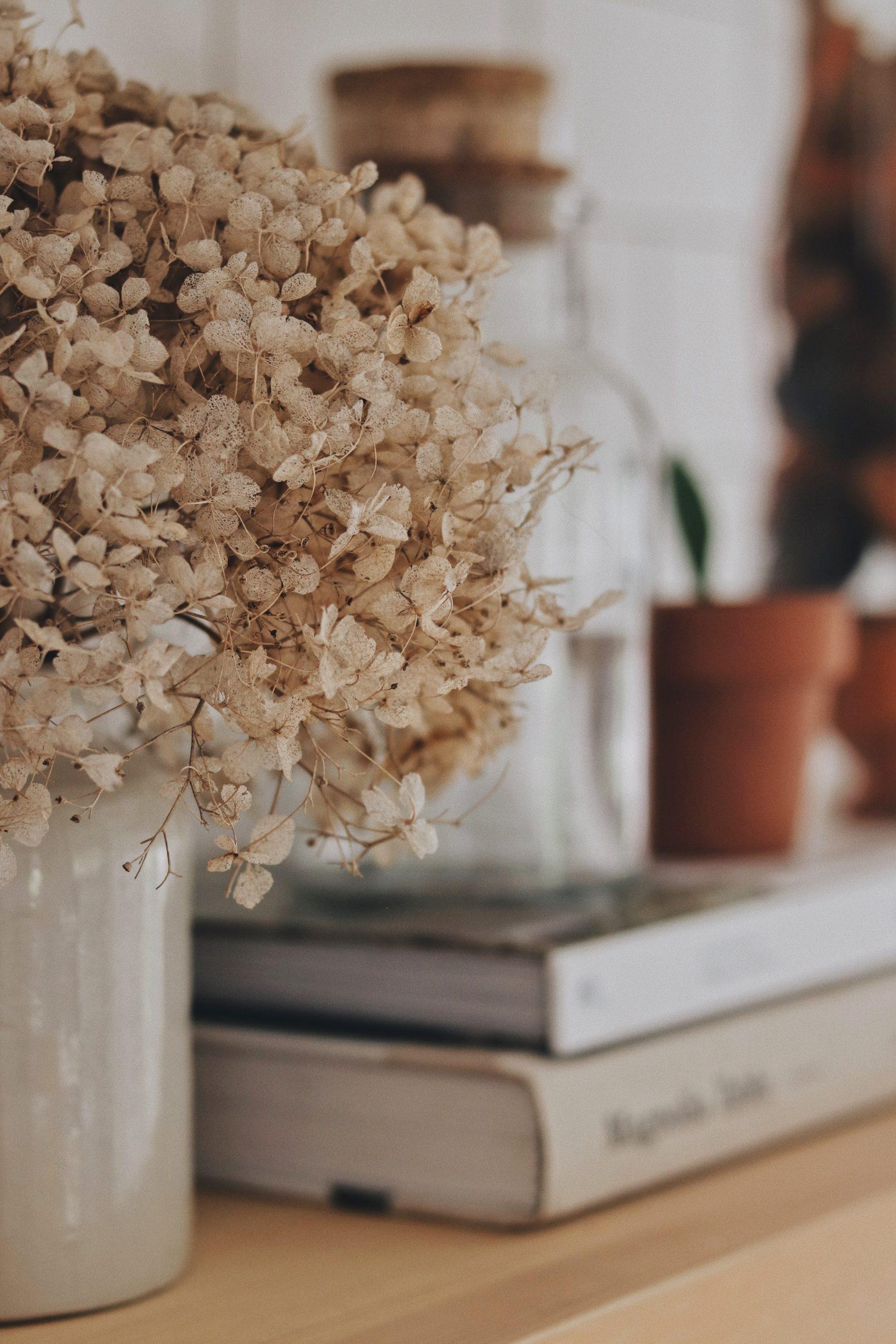 Plante et fleurs séchées