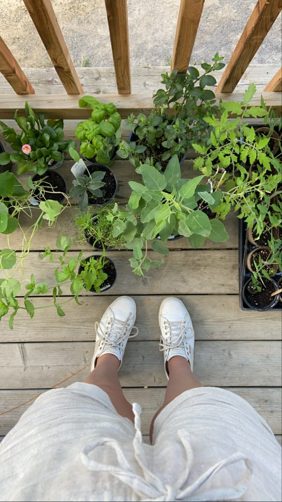 Plants en Mai - Jardinage