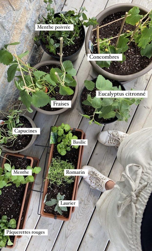 Variétés de plants choisis - Jardinage en pots