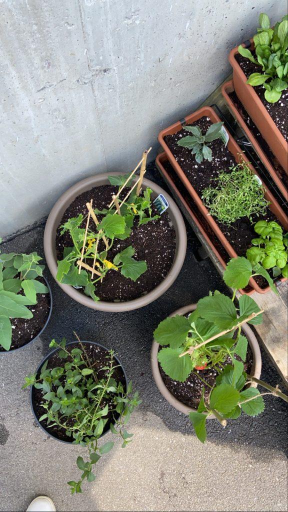 Mise en pots - Jardinage