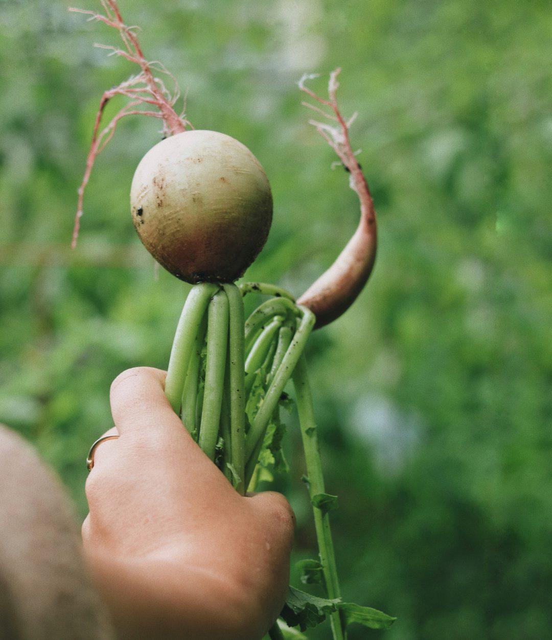 Trois erreurs commises au potager - Passion Jardins